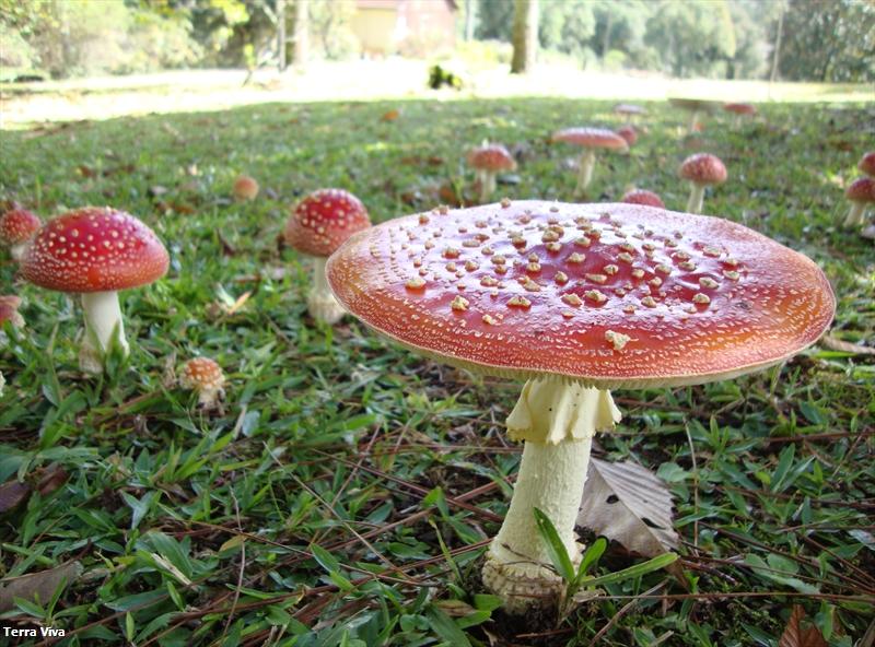 cogumelos - Copia